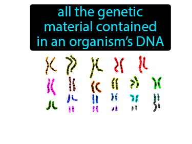 Genome Definition Flashcard