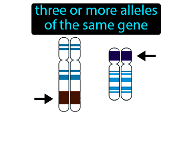 Multiple Allele Definition Flashcard