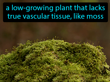 Nonvascular Plant Definition Flashcard