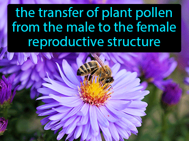 Pollination Definition Flashcard