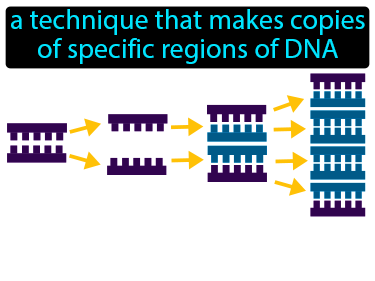 Polymerase Chain Reaction Definition Flashcard