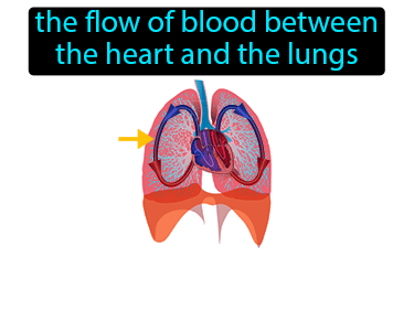 Pulmonary Circulation Definition Flashcard