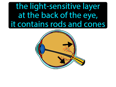 Retina Definition Flashcard