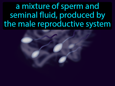 Semen Definition Flashcard