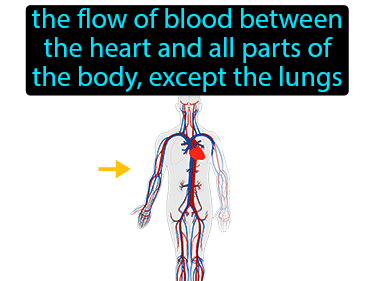 Systemic Circulation Definition Flashcard