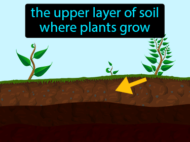 Topsoil Definition Flashcard