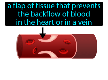 Valve Definition Flashcard