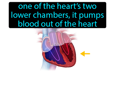 Ventricle Definition Flashcard