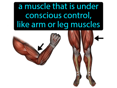 Voluntary Muscle Definition Flashcard
