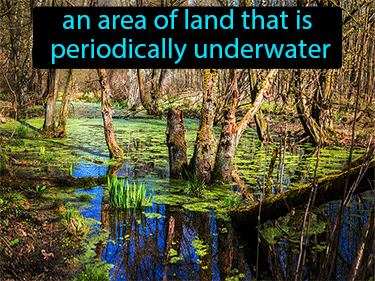 Wetland Definition Flashcard