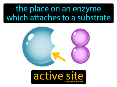Active Site Definition Flashcard