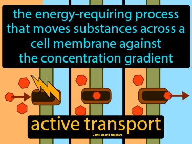 Active Transport Science Definition