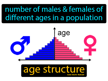 Age Structure Definition Flashcard