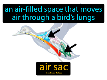 Air Sac Science Definition