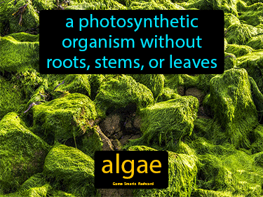 Algae Science Definition