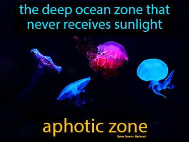 Aphotic Zone Definition Flashcard