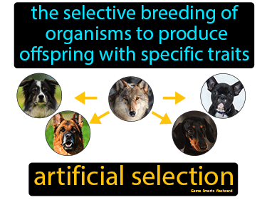 Artificial Selection Science Definition