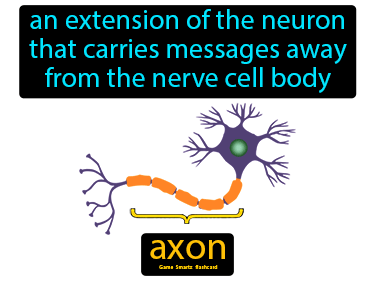 Axon Definition Flashcard