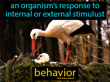 Behavior Science Definition