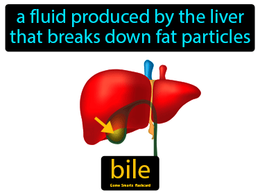 Bile Science Definition