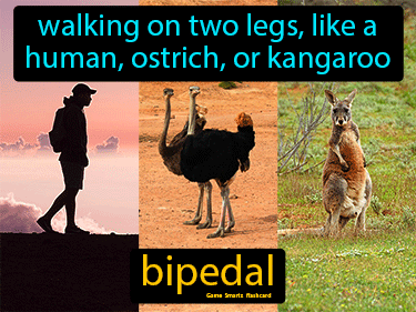 Bipedal Science Definition