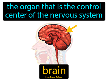 Brain Definition Flashcard