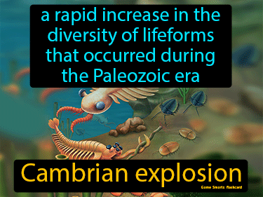 Cambrian Explosion Definition Flashcard