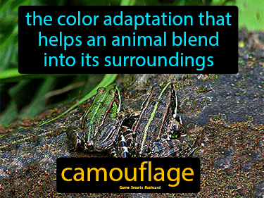 Camouflage Definition Flashcard