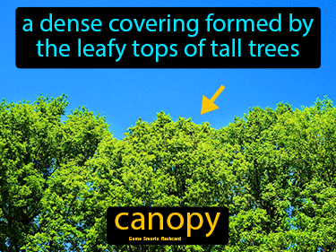Canopy Science Definition