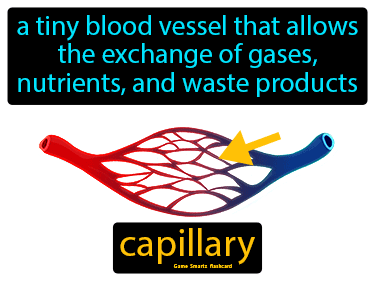 Capillary Science Definition