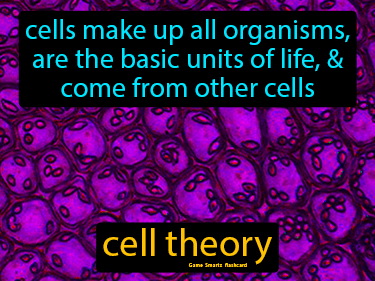 Cell Theory Definition Flashcard