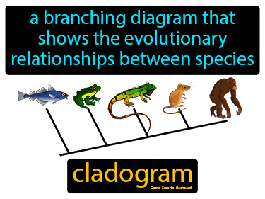 Cladogram Science Definition
