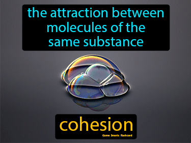 Cohesion Definition Flashcard