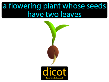 Dicot Science Definition