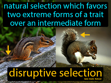 Disruptive Selection Definition Flashcard
