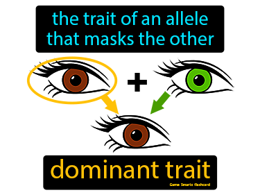 Dominant Trait Definition Flashcard