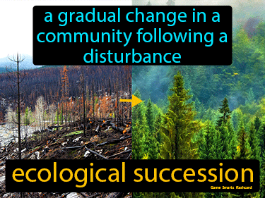 Ecological Succession Definition Flashcard