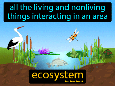Ecosystem Definition Flashcard