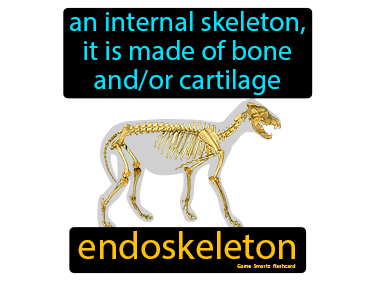 Endoskeleton Science Definition