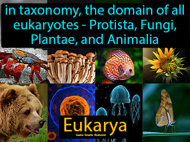 Eukarya Science Definition