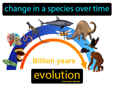 Evolution Definition Flashcard