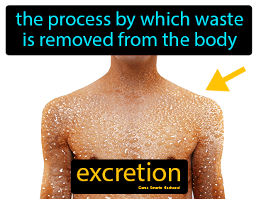 Excretion Science Definition