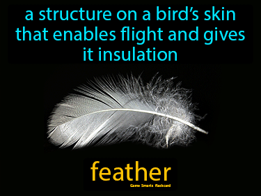Feather Science Definition