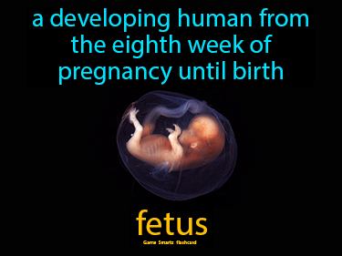 Fetus Definition Flashcard