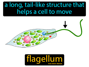 Flagellum Science Definition