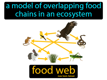 Food Web Definition Flashcard
