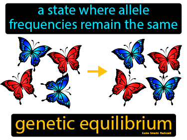Genetic Equilibrium Definition Flashcard