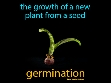 Germination Definition Flashcard