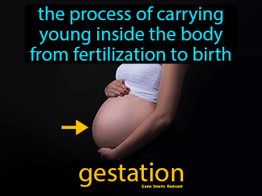 Gestation Definition Flashcard