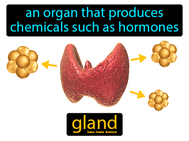 Gland Definition Flashcard